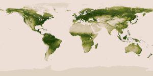 Plant life around the globe graphic