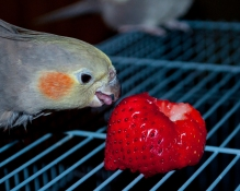 CadeStrawberry