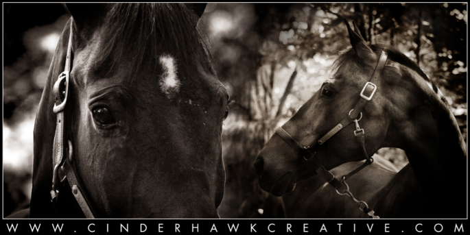 © 2014 Cinderhawk Creative | All Rights Reserved